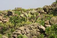 Photographie n°bb041889 du taxon
