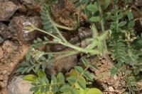 Photographie n°bb042415 du taxon