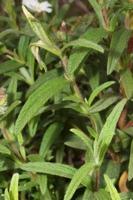 Photographie n°bb044652 du taxon