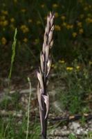 Photographie n°bb045260 du taxon