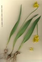 Photographie n°bb045928 du taxon