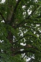 Photographie n°bb046204 du taxon