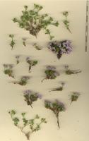 Photographie n°bb046876 du taxon