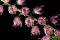Photographie n°bb047468 du taxon