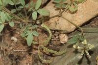 Photographie n°bb049133 du taxon