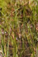 Photographie n°bb052520 du taxon