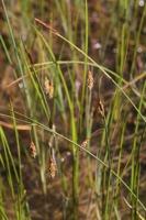Photographie n°bb052523 du taxon