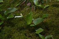 Photographie n°bb052534 du taxon