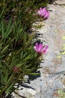 Photographie n°bb052921 du taxon