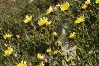 Photographie n°bb053636 du taxon