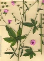 Photographie n°bb058538 du taxon