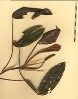 Photographie n°bb058619 du taxon