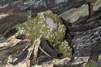 Photographie n°bb058806 du taxon