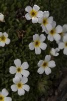 Photographie n°bb058862 du taxon