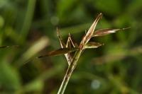 Photographie n°bb059579 du taxon
