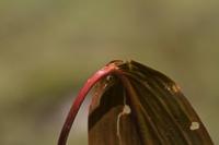 Photographie n°bb059669 du taxon