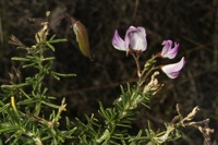 Photographie n°bb060152 du taxon