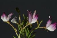 Photographie n°bb060162 du taxon