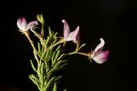 Photographie n°bb060168 du taxon