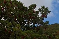 Photographie n°bb061188 du taxon