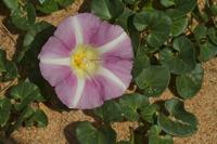 Photographie n°bb064167 du taxon