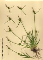 Photographie n°bb064559 du taxon