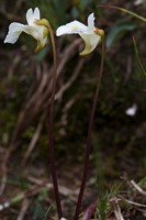 Photographie n°bb065565 du taxon