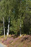 Photographie n°bb066222 du taxon