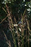 Photographie n°bb066230 du taxon