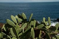 Photographie n°bb067176 du taxon