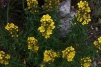 Photographie n°bb071429 du taxon