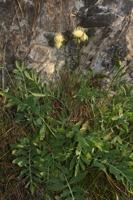 Photographie n°bb071572 du taxon