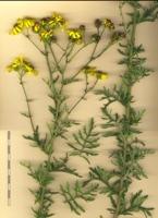 Photographie n°bb073611 du taxon
