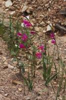 Photographie n°bb074661 du taxon
