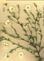 Photographie n°bb075230 du taxon