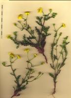 Photographie n°bb075292 du taxon