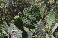 Photographie n°bb076115 du taxon