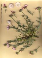 Photographie n°bb077994 du taxon
