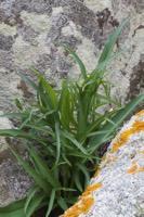 Photographie n°bb083012 du taxon