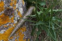 Photographie n°bb083013 du taxon