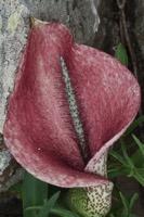 Photographie n°bb083014 du taxon