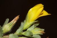 Photographie n°bb083506 du taxon