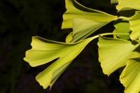 Photographie n°bb084289 du taxon