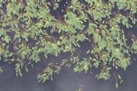 Photographie n°bb087040 du taxon