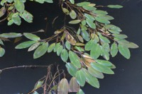 Photographie n°bb087054 du taxon