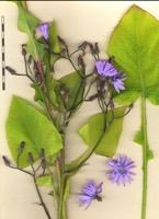 Photographie n°bb088055 du taxon