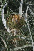 Photographie n°bb091101 du taxon