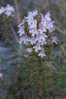 Photographie n°bb092912 du taxon