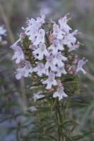 Photographie n°bb092914 du taxon