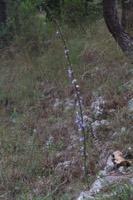 Photographie n°bb093082 du taxon